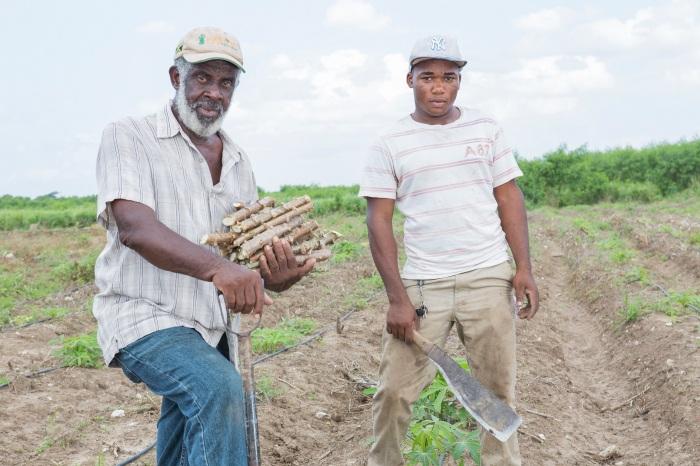 Jamaica, Red Stripe, Red Stripe Beer, Project Grow, PR, Press Release, Blog, 13thStreetPromotions, 13thStreetPromo, Farming, Cassava